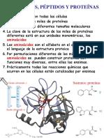 aminoacidos peptidos-proteinas.pdf