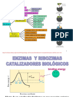 Enzimas_Quimica