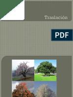 1463427445PPT Traslación (2)