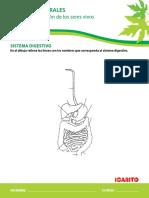 aparato digestivo.pdf