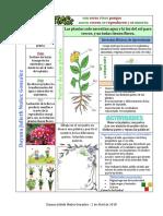 Las Plantas Tabla de Worddd