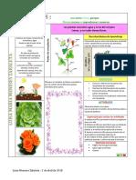 Fases Del Proyecto Pedagogico