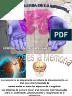 Quinta Clase Neurobiologia Sentido Numerico