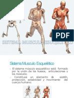 sistemamusculoesqueltico