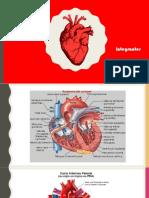 Cirugías del corazón
