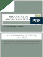 Mecanismos de Adaptacion Celular