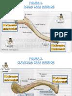 Atlas guia modulo apendicular.pptx