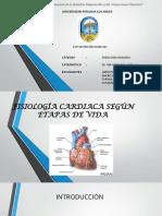 285208005-Fisiologia-Cardiaca-Segun-Etapas-de-Vida.pptx