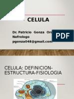 celula1