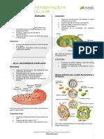 Visão Geral Fermentação e Respiração Celular - Resumo