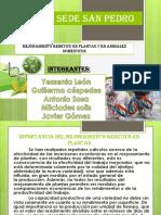 Mejoramiento Genético en Plantas y en Animales Domésticos