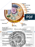 Tema 3 La Celula