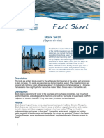 fact sheet - black swan