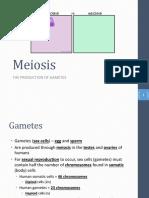 block 2 - meiosis  c