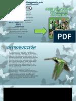 Aves Del Perú en Extinción