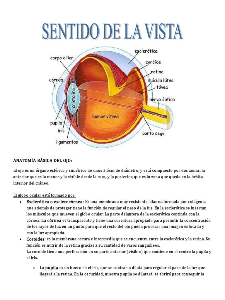 Anatomía Básica Del Ojo