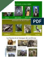 Animales Selva Humeda Seca Bosque Pastizal Matorral