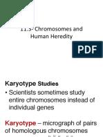 11-3 chromosomes and human heredity
