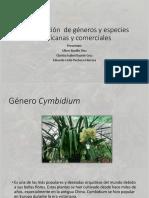 Identificación de Géneros y Especies Mexicanas y Comerciales Empecharada y Arremangada