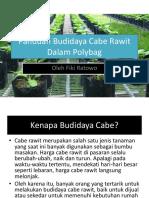 Fiki Panduan Budidaya Cabe Rawit Dalam Polybag