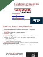 A Transposable Elements Dp Dk Ej 113016