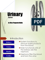 7. Sistem Urinary - Dr Nico