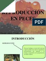 Reproduccin en Peces