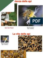 6. Danza delle api.pdf