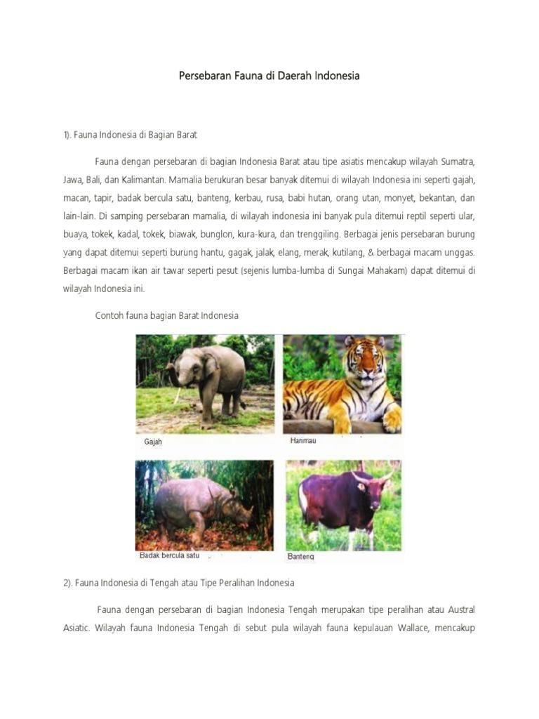 56+ Gambar Fauna Bagian Peralihan Gratis