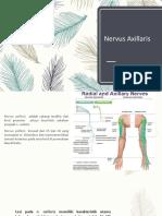 Nervus Axillaris