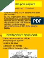 2.5 CARACTERISTICAS PESCADOS