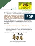 abelhas_curios1