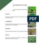 Plantas Medicinales de Los Xinkas