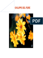 fiore5.pdf