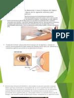 Examenes y Fisiopatologia