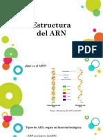 Estructura Del ARN