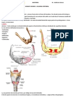 Anatomia Hiodes y Columna Uba