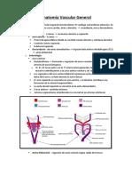 Anatomía Vascular General