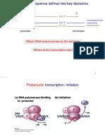 BIO genetics transcription