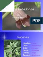 Vdokumen.com Atropa Belladonna the Deadly Nightshade Taxonomy Kingdom Plantae Class(1)