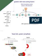 BIO Genetics Yeast Transcription