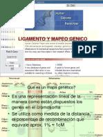 LIGAMENTO-GENICO-2016