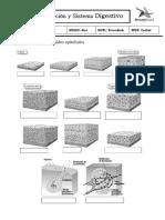 digestivo 4to 2018.pdf