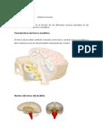 Informe de Morfofisiologia