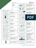 Formato convenciones periodontograma