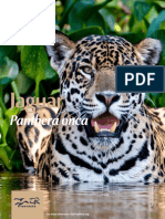 Panthera FactSheets Jaguar