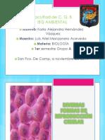 Diversa Formas de Reproducción Celular