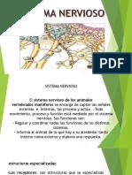 Exposicion Sistema Nervioso