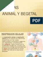 Celula Animal y Begetal