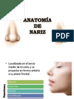 Anatomía de Nariz Otorrinolaringologia